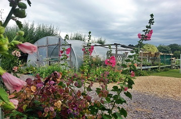 Poly tunnel at The Nursery